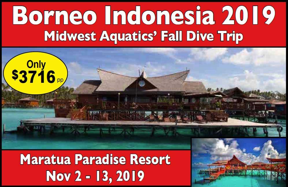 2019 Borneo Indonesia
